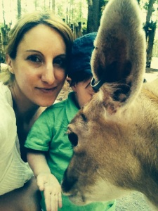 parc safari 1